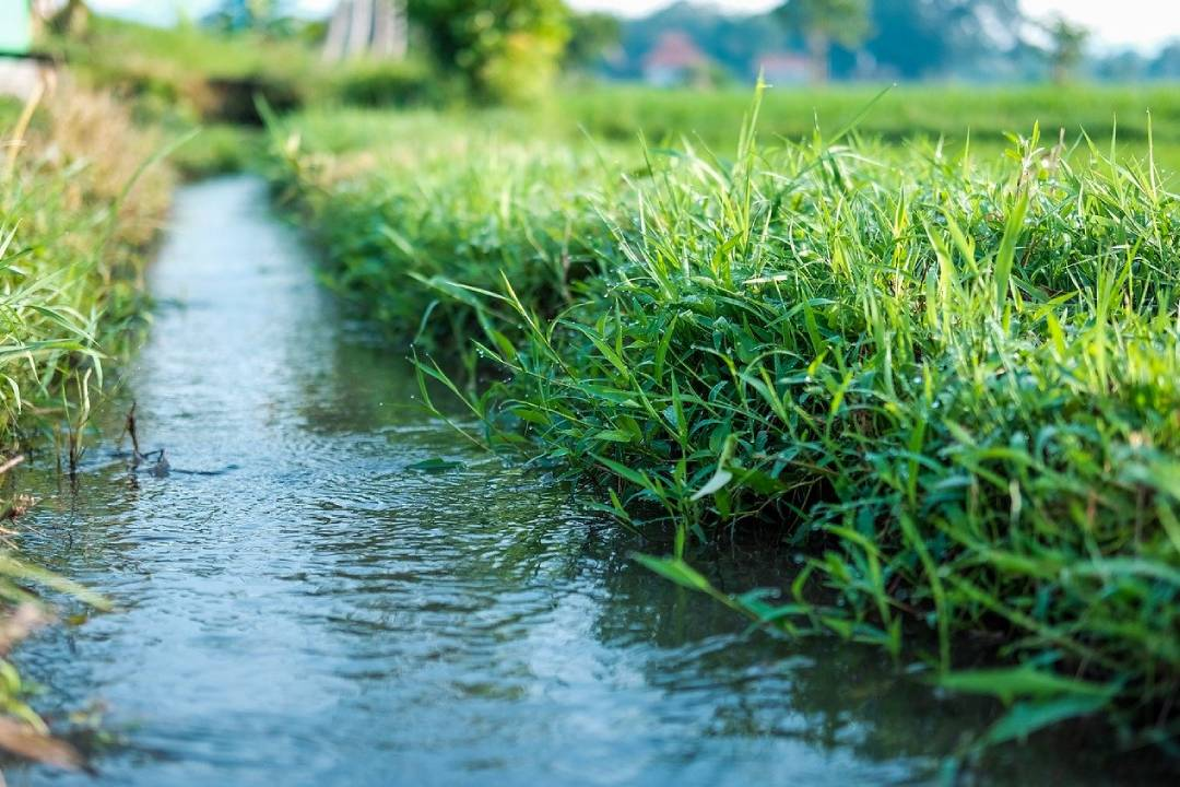 Drainage and Irrigation are important parts of garden maintenance